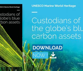 UNESCO Marine World Heritage report: Custodians of the globe's blue carbon assets